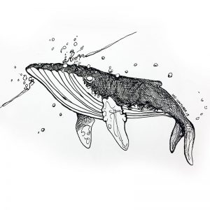 Whale illustration by Creative Wisdom