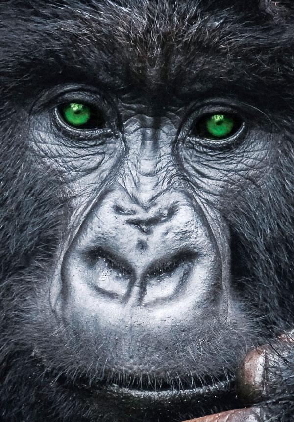 Green gorilla eyes